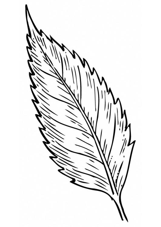 Coloring page leaf - img 12949.