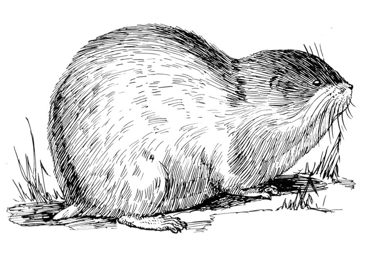 Coloring page lemming