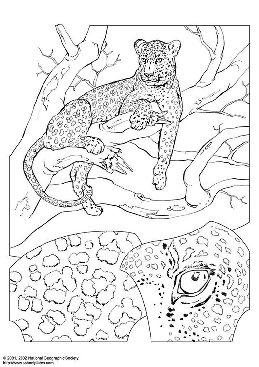 Coloring page leopard
