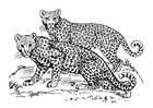 Coloring pages leopard