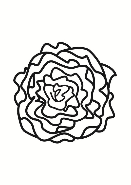 Coloring page lettuce
