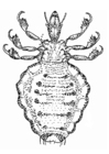 Coloring pages lice