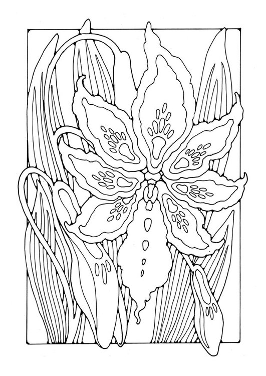 Coloring page lily