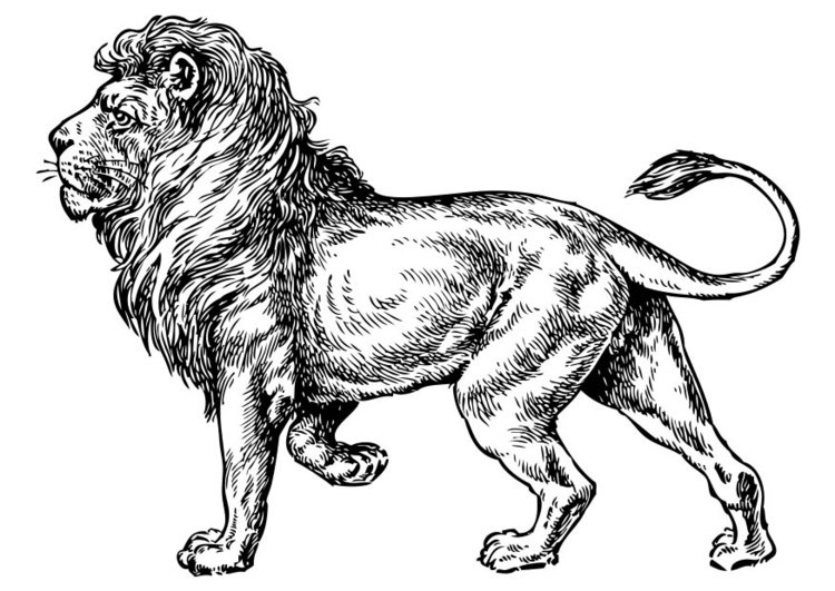 Coloring page Lion - img 17373.