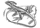 Coloring page lizard - basilisk