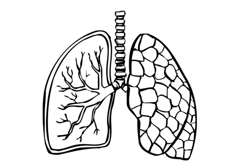 Coloring page lungs
