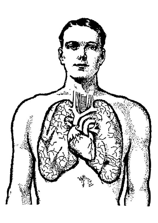 coloring page lungs img 25583