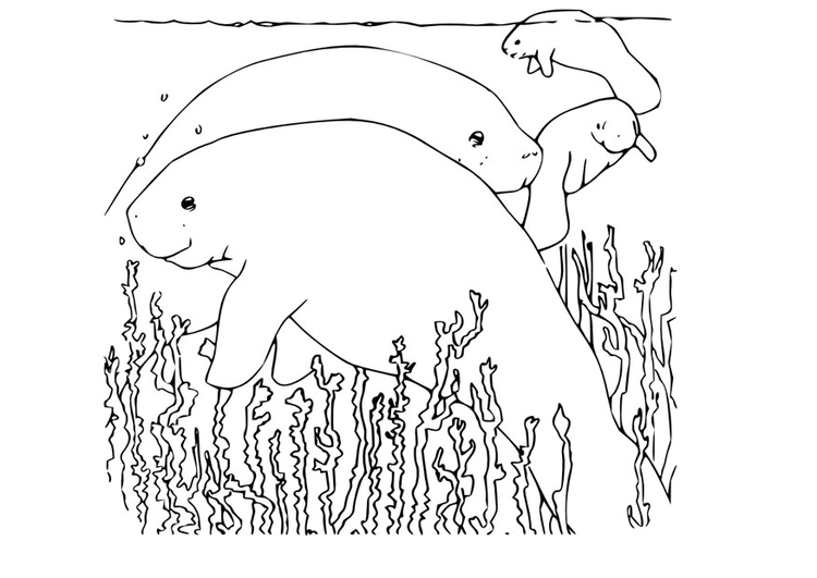 Coloring page manatee