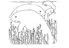 Coloring pages manatee