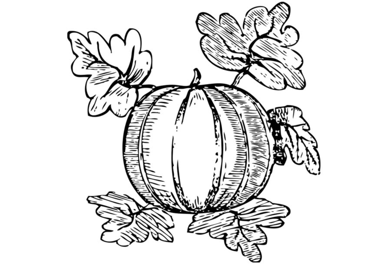 Coloring page Melon