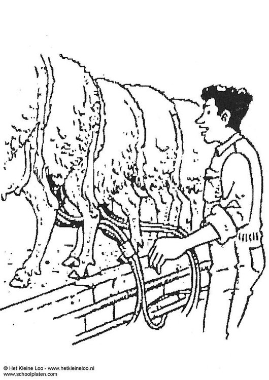 Coloring page milking sheep