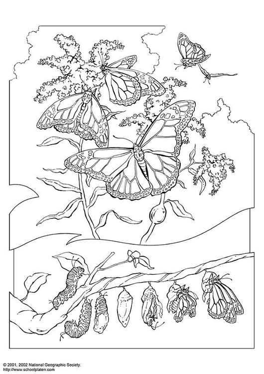 Coloring page monarch butterfly