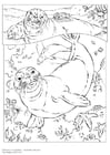Coloring page monk seal
