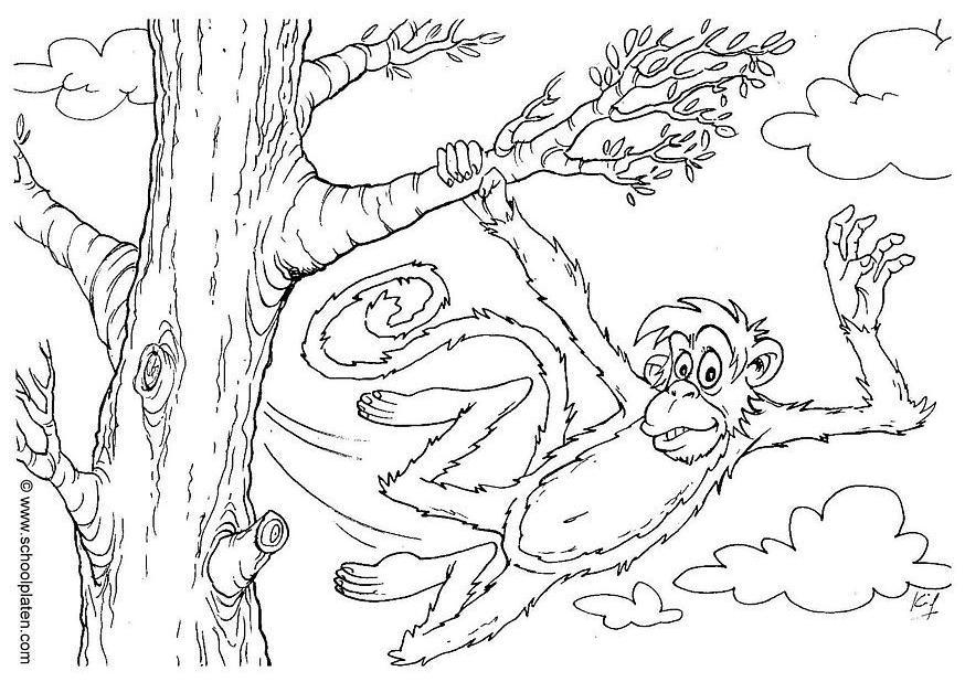 Coloring Page Monkey Img 2863