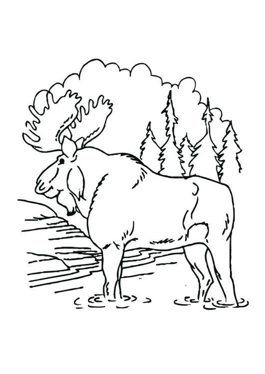 Coloring page moose