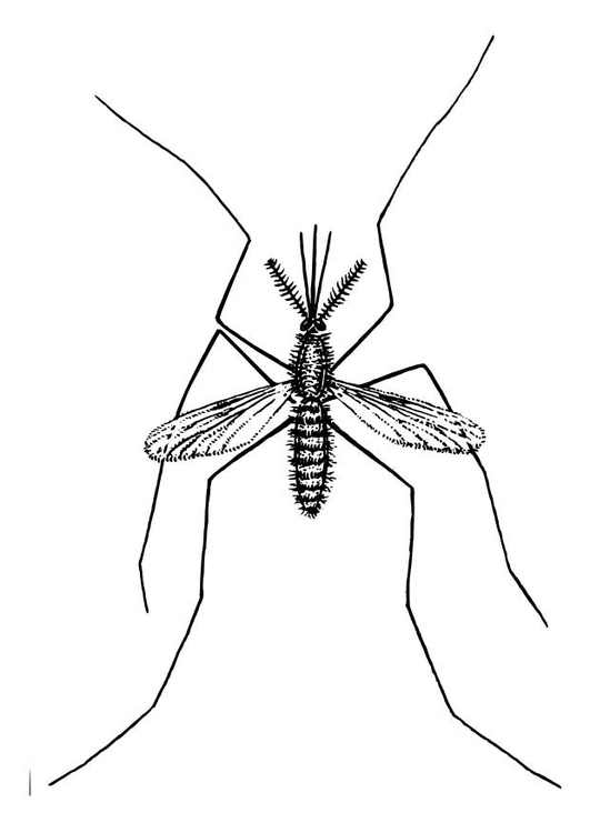 Coloring page Mosquito