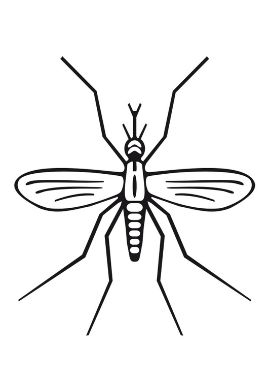 coloring page mosquito img 27275