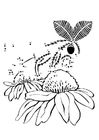 Coloring pages moth