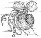 Coloring pages Nautilus - Octupus