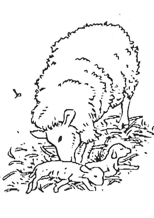 Coloring page newborn lamb