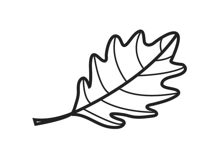 Coloring page Oak Leaf