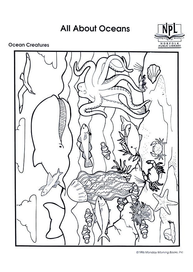 ocean animals photos. Coloring page ocean creatures