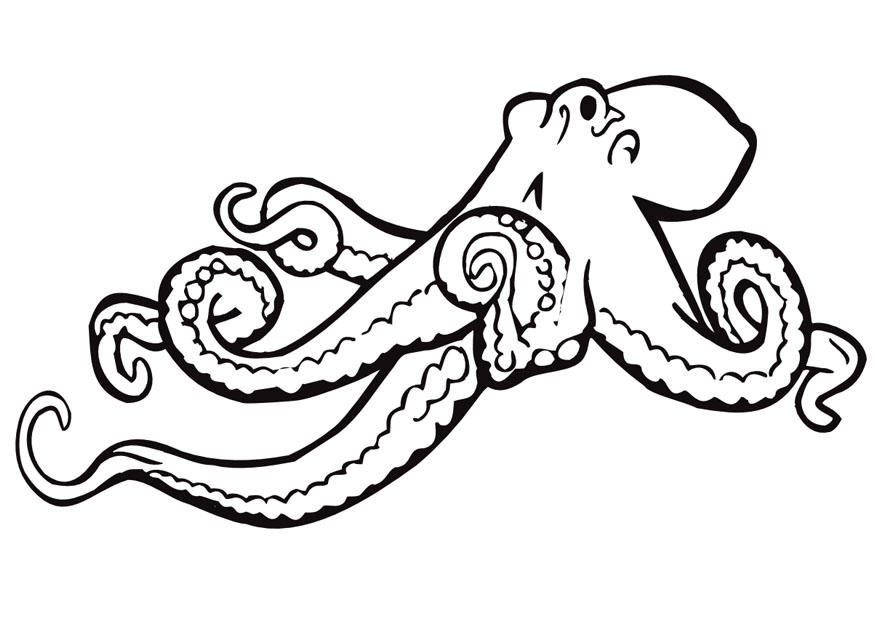 Coloring page octopus