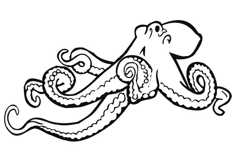 Coloring page octopus - img 9973.
