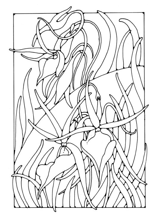 Coloring page orchid