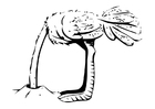 Coloring page ostrich with head burried in sand