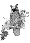 Coloring pages owl