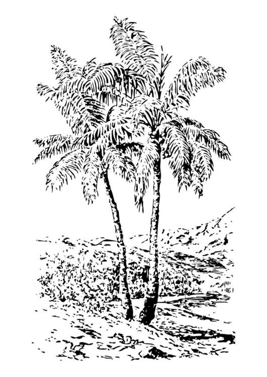 palm tree - Palm Tree Branches Coloring Pages