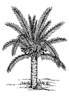 Coloring page palm tree