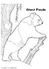 Coloring page panda bear