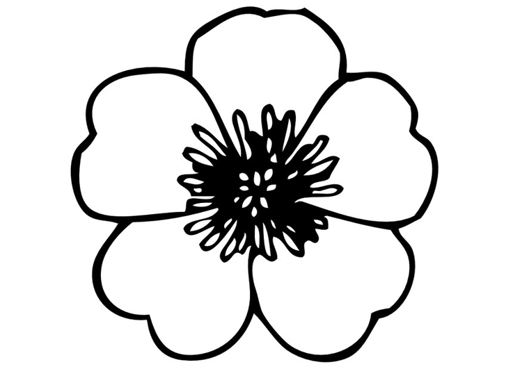 coloring page pansy