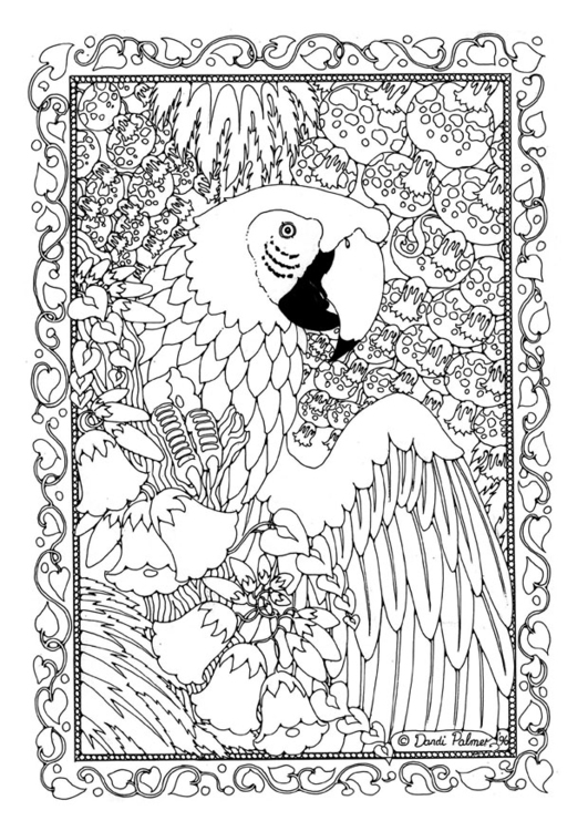 Coloring Page parrot - free printable coloring pages