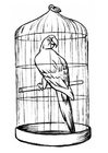 Coloring page parrot in a cage