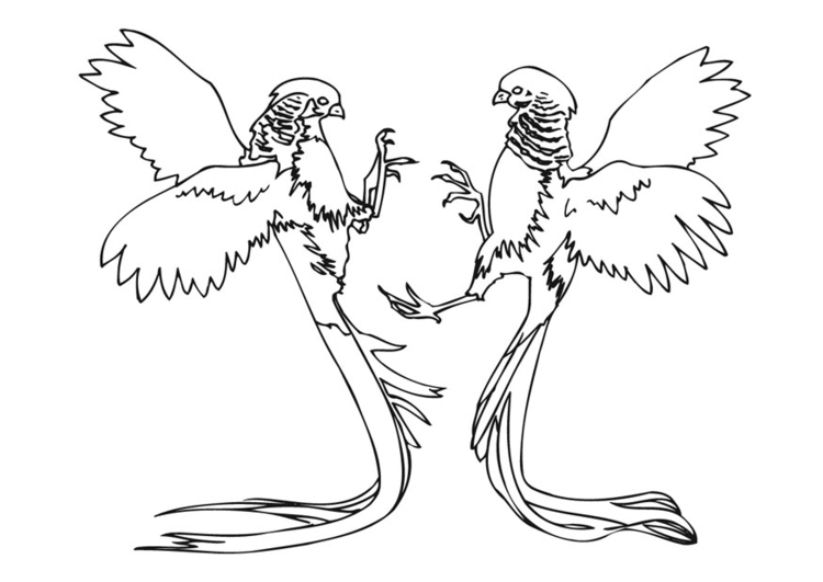 Coloring page parrots fighting