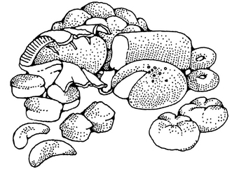 Coloring page Pastries