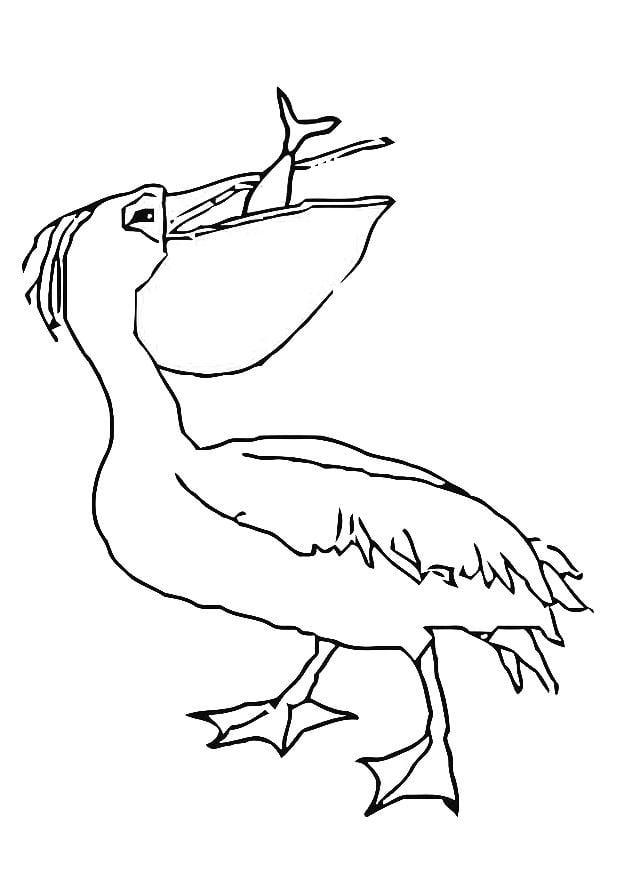 Coloring page pelican eats fish