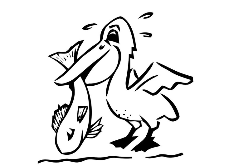 Coloring page pelican with fish