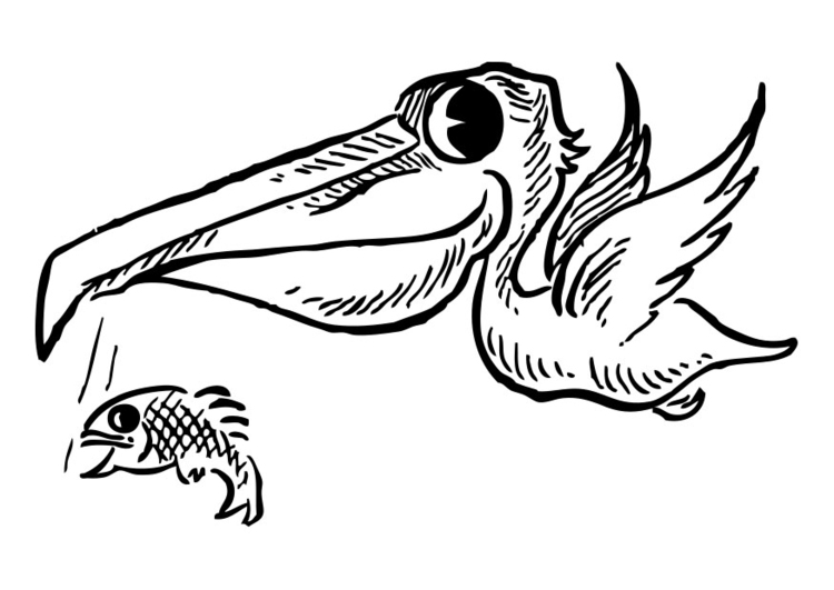 Pelican Coloring Page - Free Pelican Coloring Pages ... | 531x750