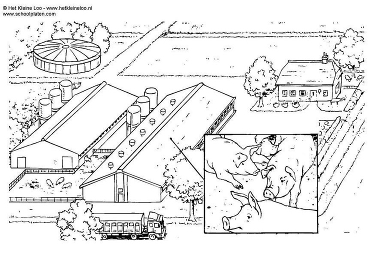 Coloring page pig breeding farm