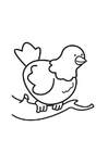 Coloring pages Pigeon