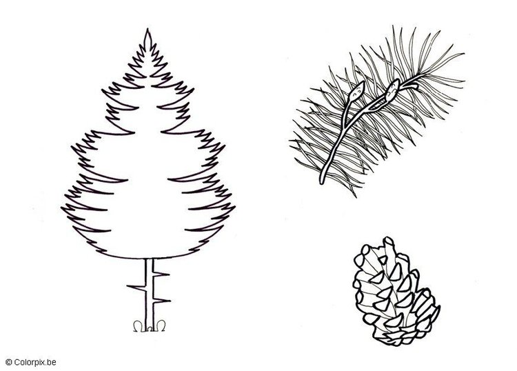 Coloring page Pine