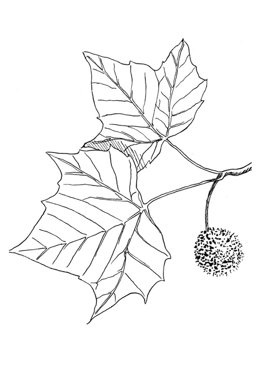 Coloring page plane tree