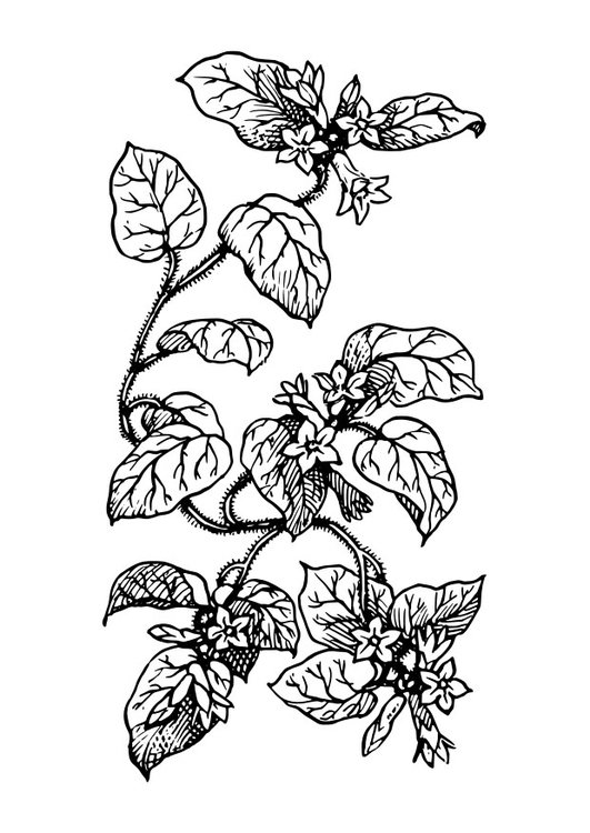 Coloring page plant