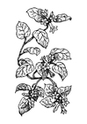 Coloring pages plant