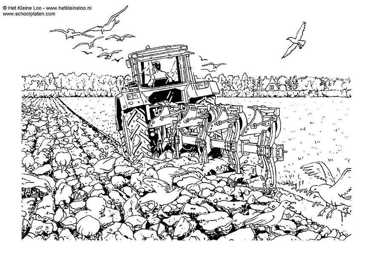 Coloring page plowing