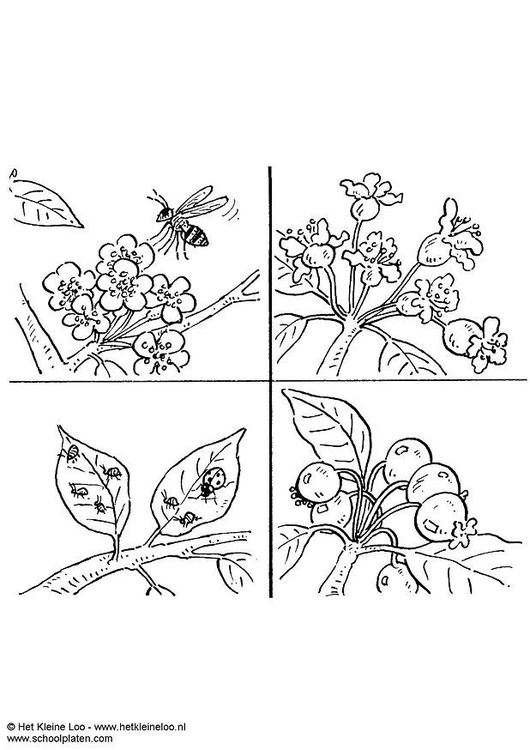 Coloring page pollinate